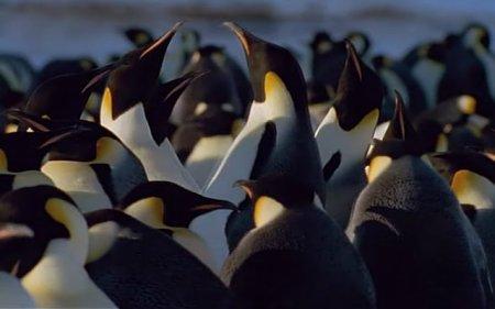 pinguinos1.jpg