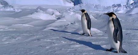 pinguinos3.jpg